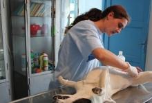 Continuă sterilizarea gratuită a câinilor şi pisicilor din Topoloveni